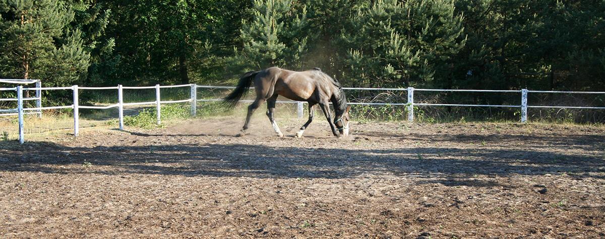 Pferd am Reiterhof Bernsteinsee